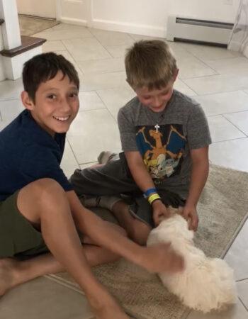 cavachon puppy with boys